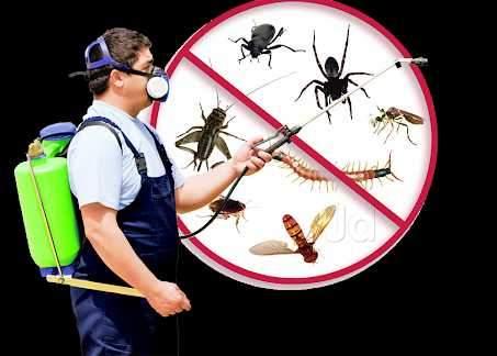 K.g.n Pest Control