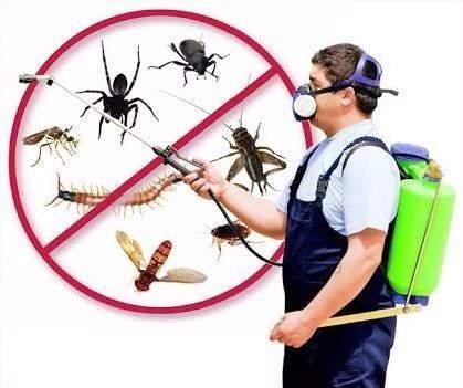 Warriors Pest Control And Kalpana Painting Services